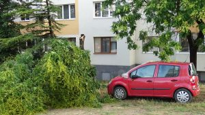 Бурята пречупи дървета в Благоевград, има щети