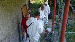 Дезинфекцират задните дворове в Кресна заради чумата по свинете