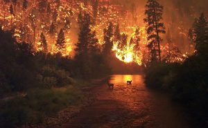 Горските пожари в Боливия са изпепелили повече от 4 милиона хектара гора