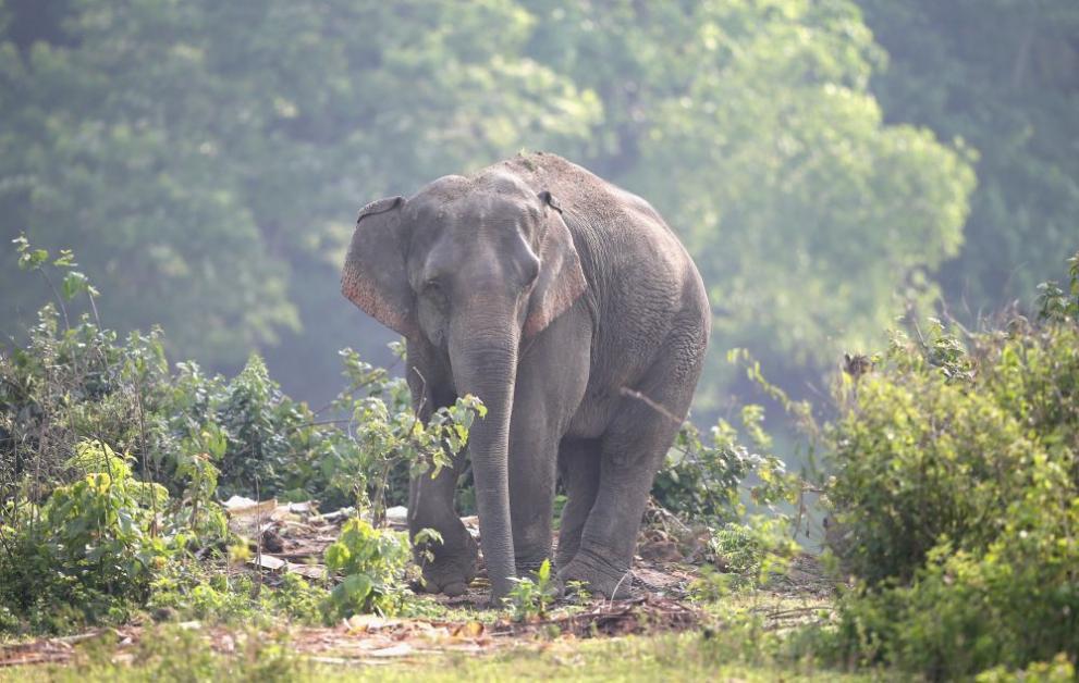 Шест слона намират смъртта си в Тайланд при опит да се спасят един друг