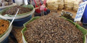 Футуролози: Храната на бъдещето са насекомите