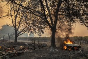 МВнР: Няма данни за пострадали българи при горските пожари в Калифорния